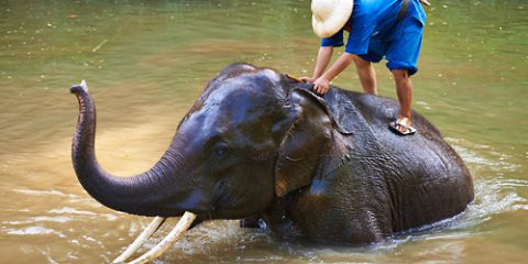 Taje Thajska