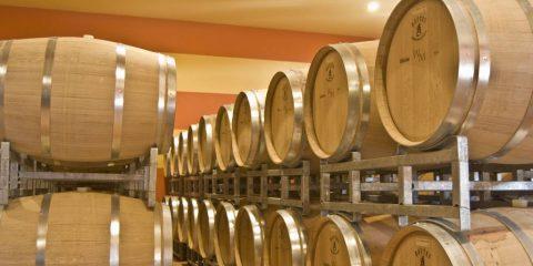 Co jste chtěli vědět o víně, ale báli jste se zeptat